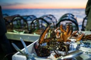 La pêche aux homards aux Îles de la madeleine